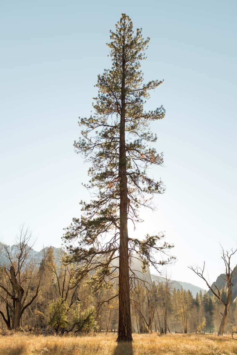 Yosemite (45 of 59)