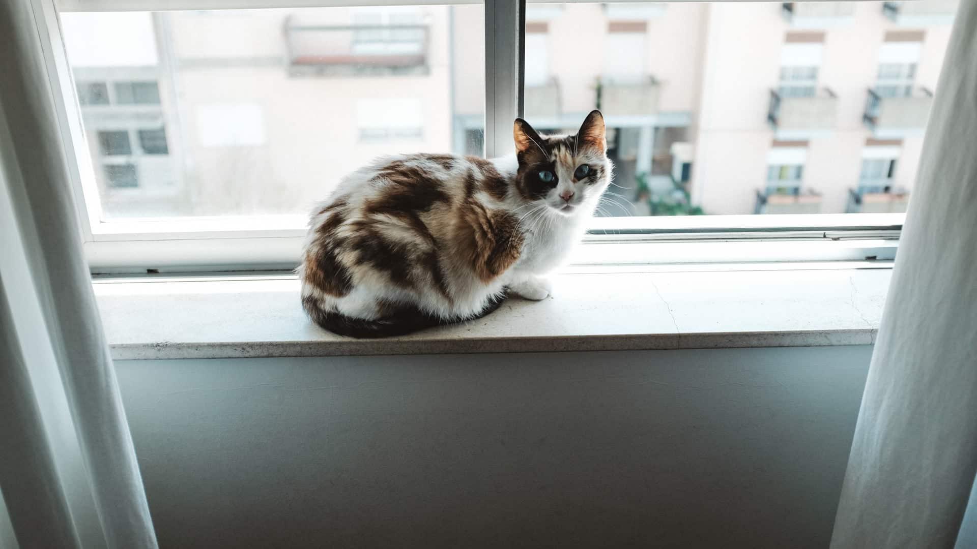 Cat on a window